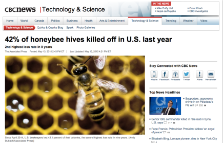 bees killed